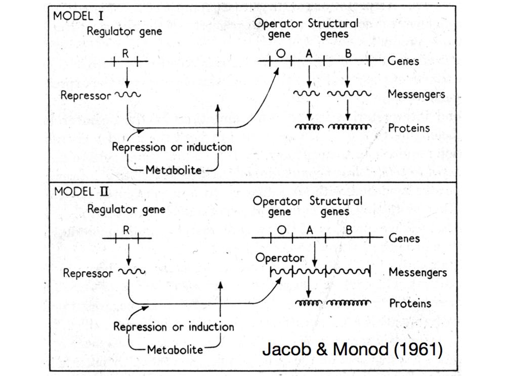 JacobMonod.003.png