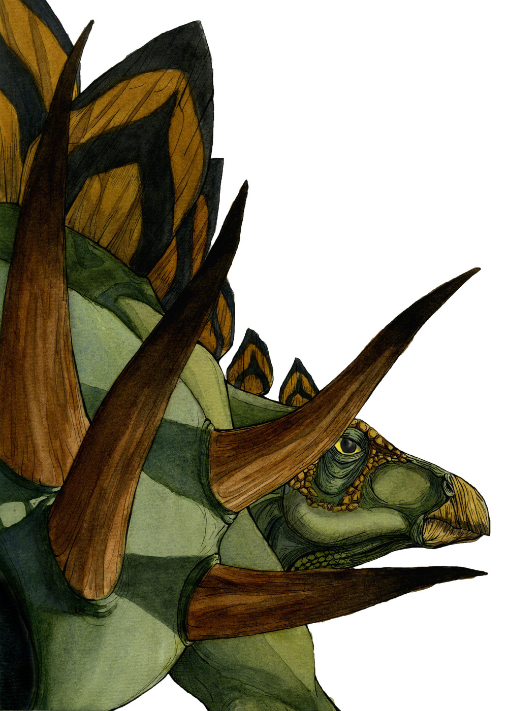 Stegosaurus copy.jpg