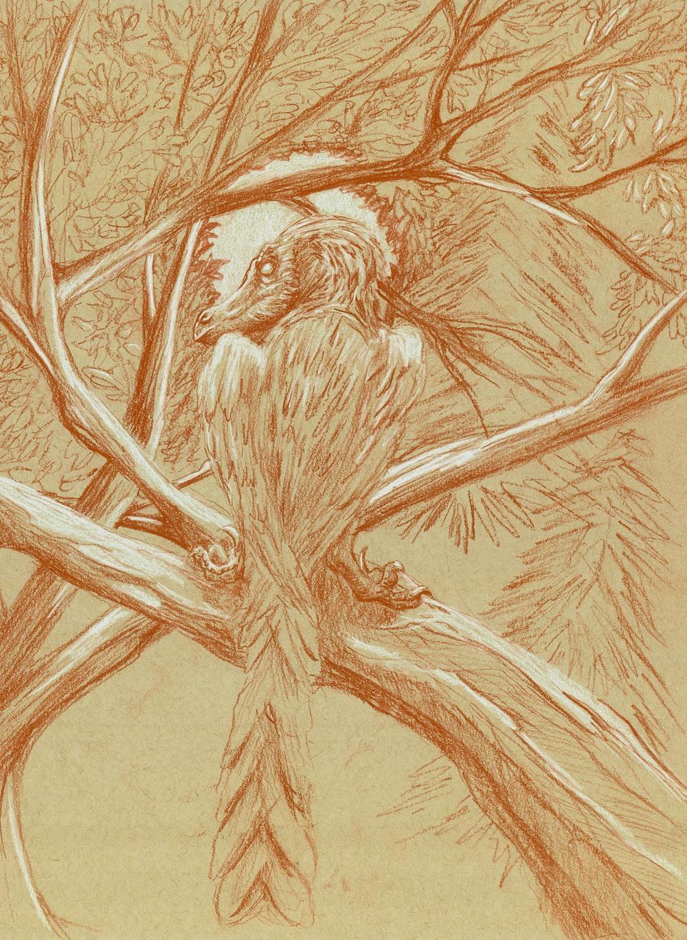 velociraptor study.jpg