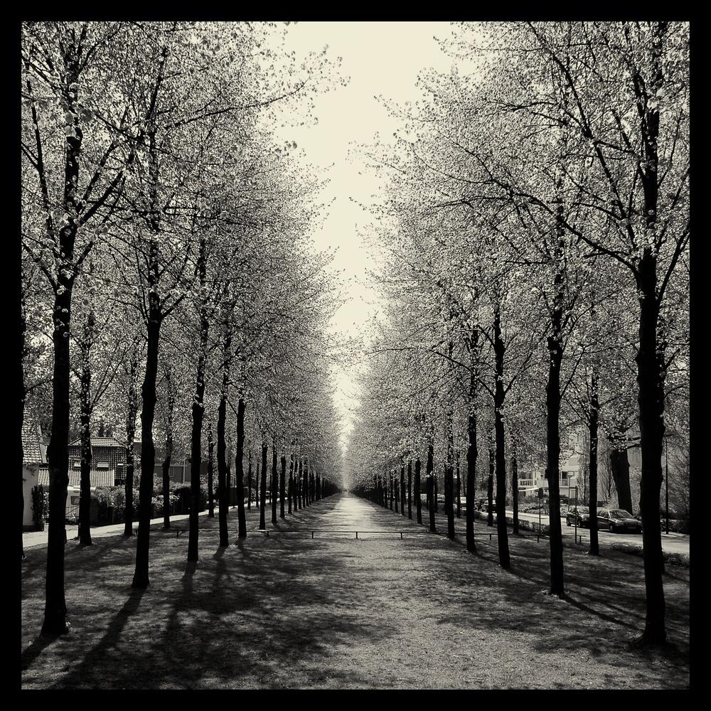 Spring Lane.jpg