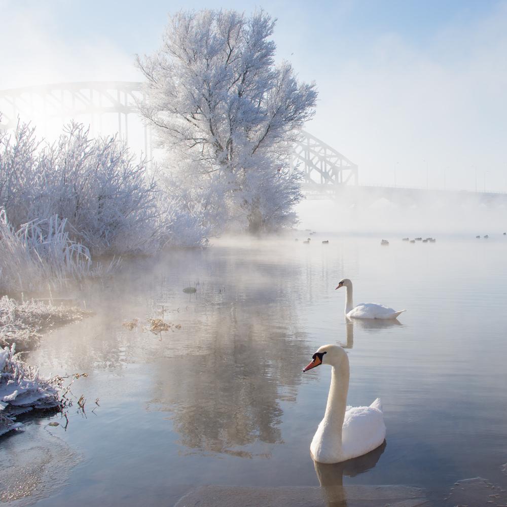 Sony α NEX-7 | Icy Swan Lake, February 04, 2012.