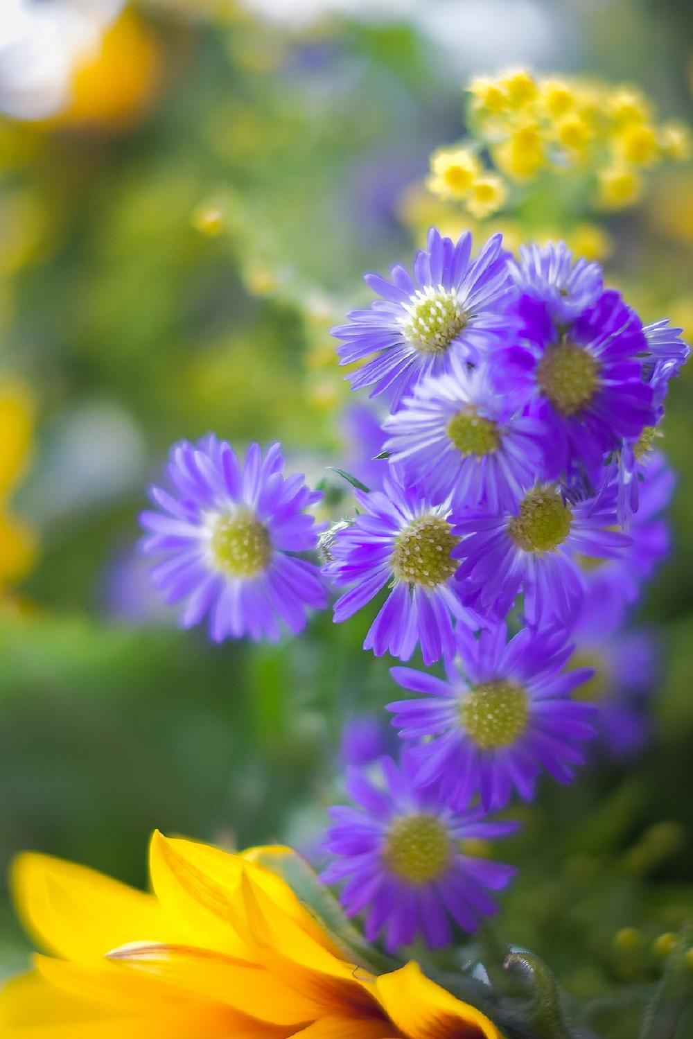 Fleurs dans la lumière