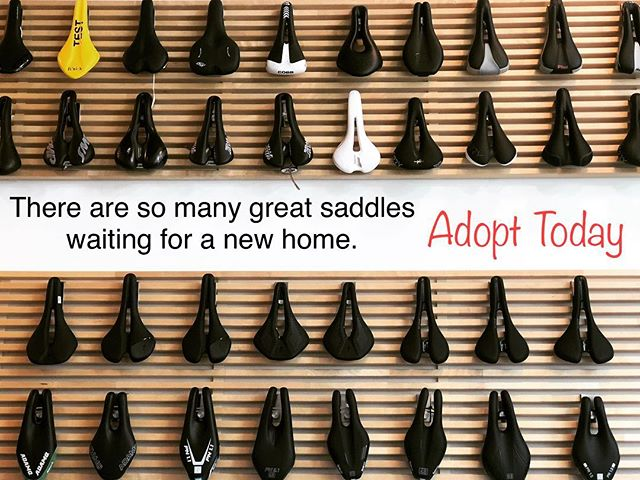 Take care of your tush, find the right one.  #newsaddleday #adoptasaddle