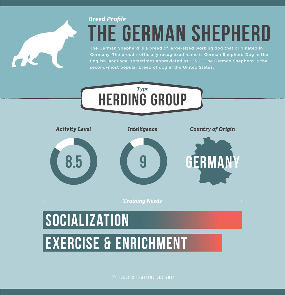 German Shepherd training infographic