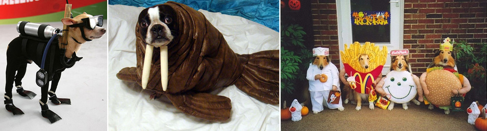 Hilarious Halloween dog costumes that might not be for every dog