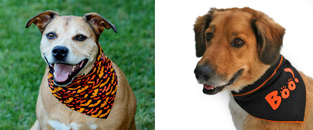 Halloween bandanas for your dog!