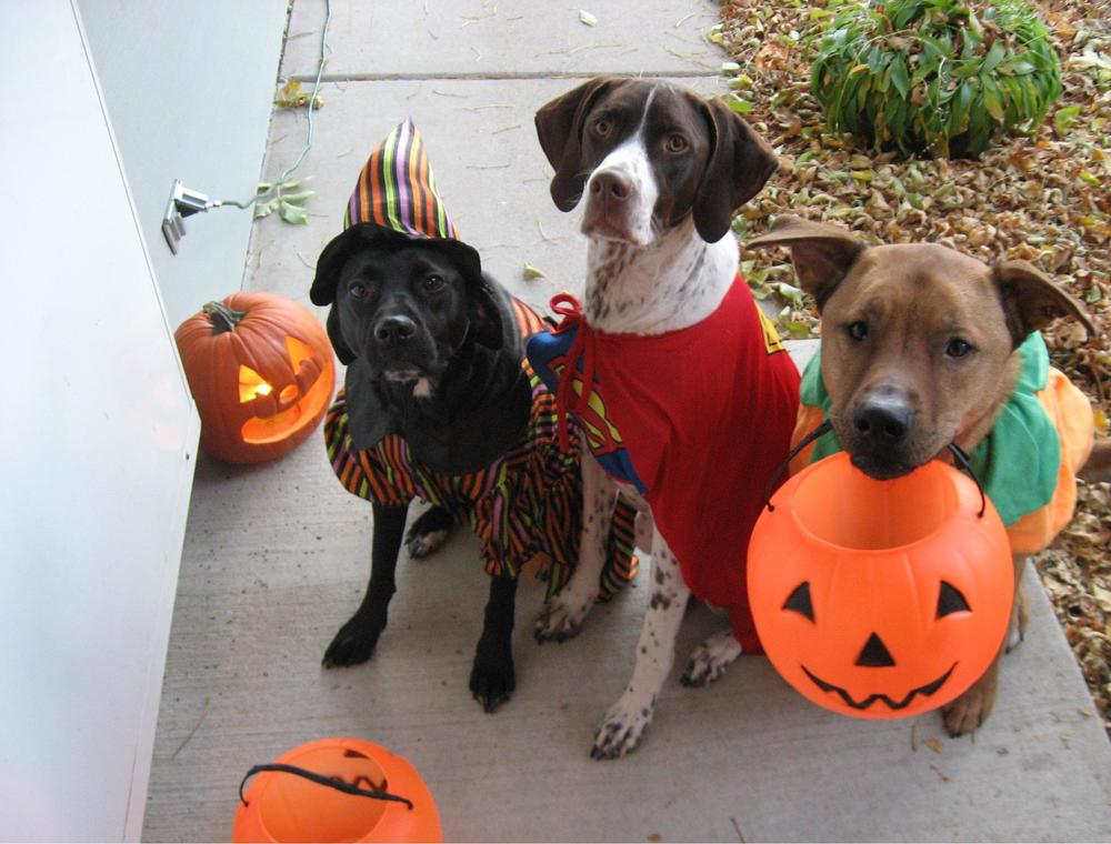 Thinking about Trick-or-Treating with your dog? Probably not a good idea!
