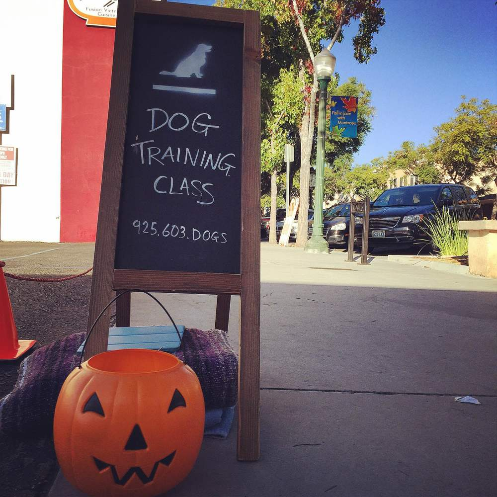 A Tully's Training dog Halloween Group Dog Training Class in Los Angeles