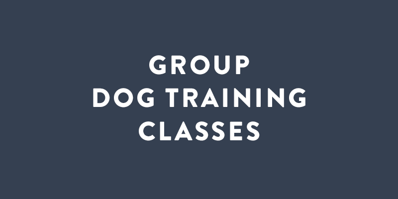 Slideshow_Group_Dog_Training_Service.png