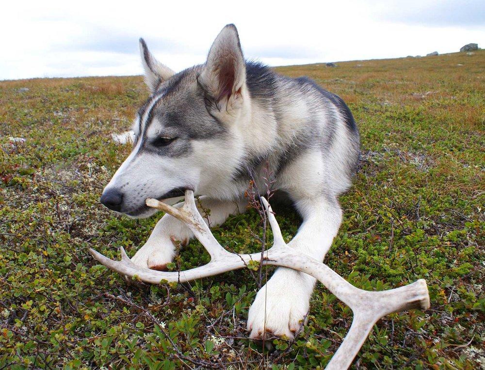 dog_chews.jpg