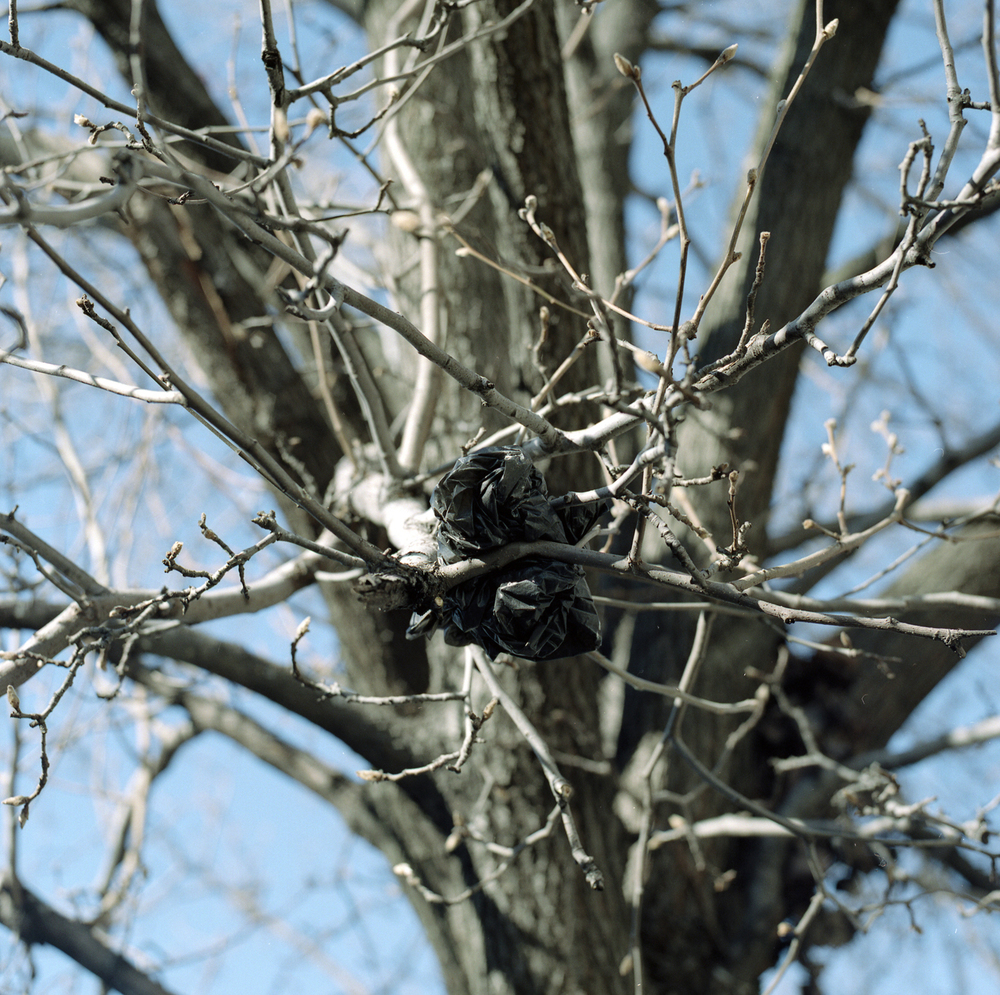5_SLPV13_BagsinTrees012.jpg