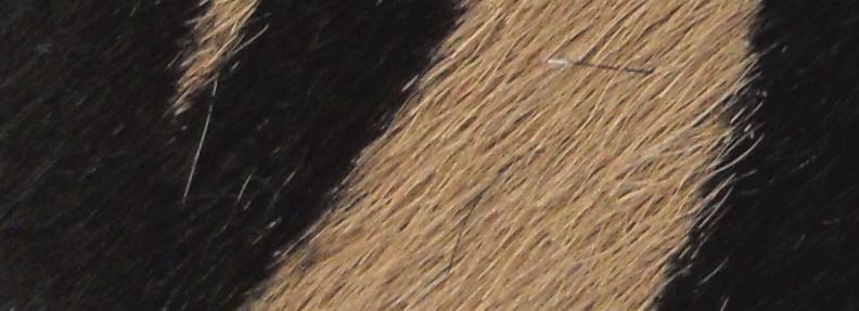 Zebra Print Camel Hair