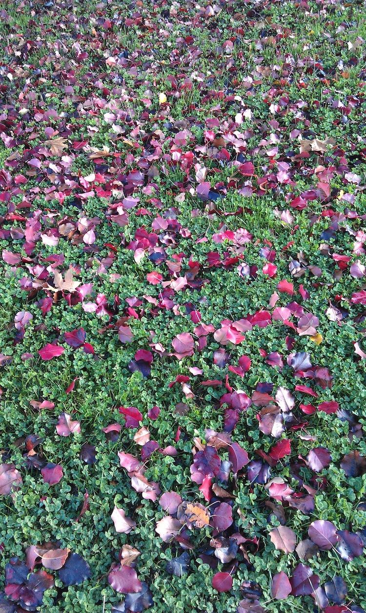 autumn 750w.jpg