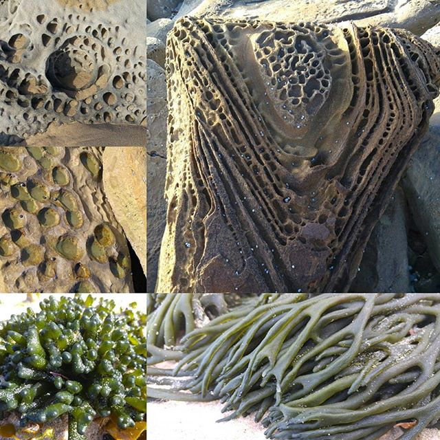 It's all about the #texture. #naturedesign #natureza #australian #naturelover #beach