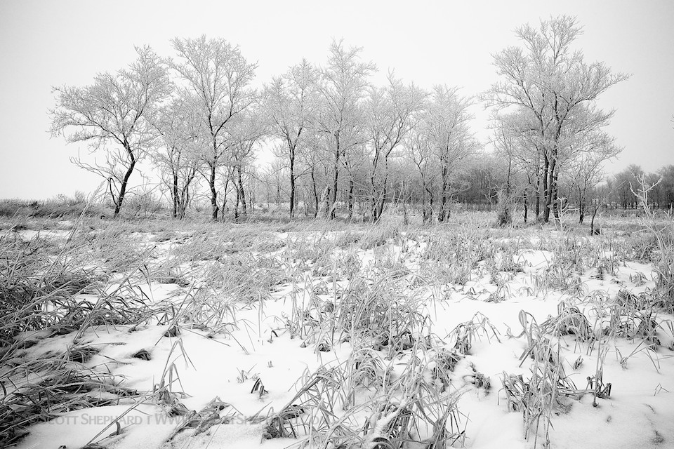 12-17-12 Winterscape    I went wading through snow that was calf deep to get this shot. Twice. Was it worth it? I'd say…    View Post    shared via  WordPress.com