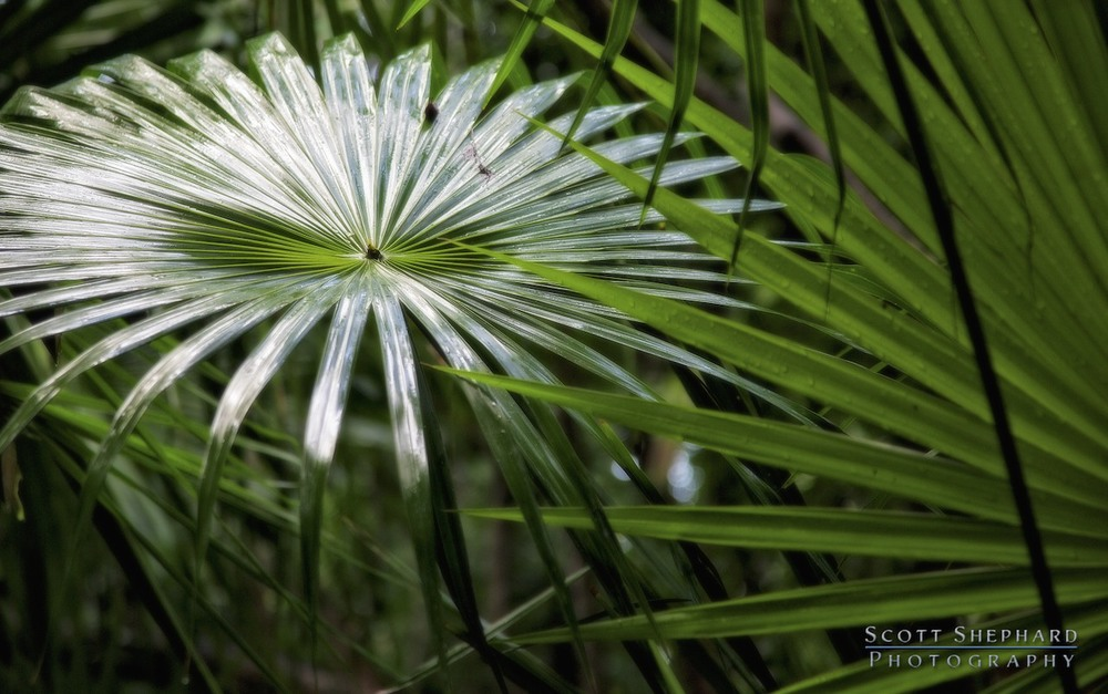 2014 01-02 Bright Palm by Watertown, South Dakota, photographer Scott Shephard