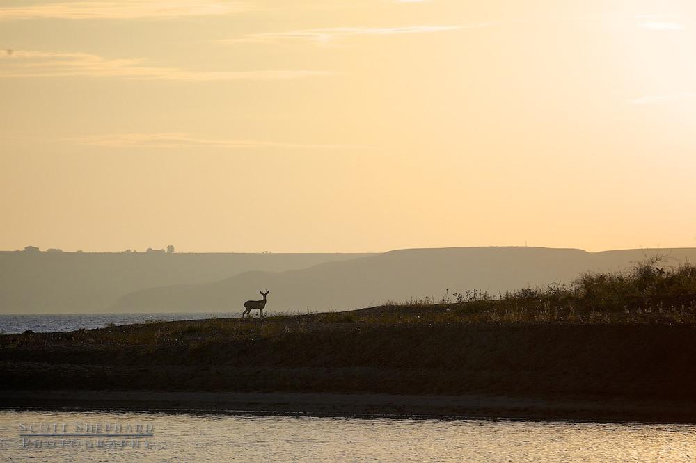 2014 01-26 Vigilance by Watertown, South Dakota, photographer Scott Shephard
