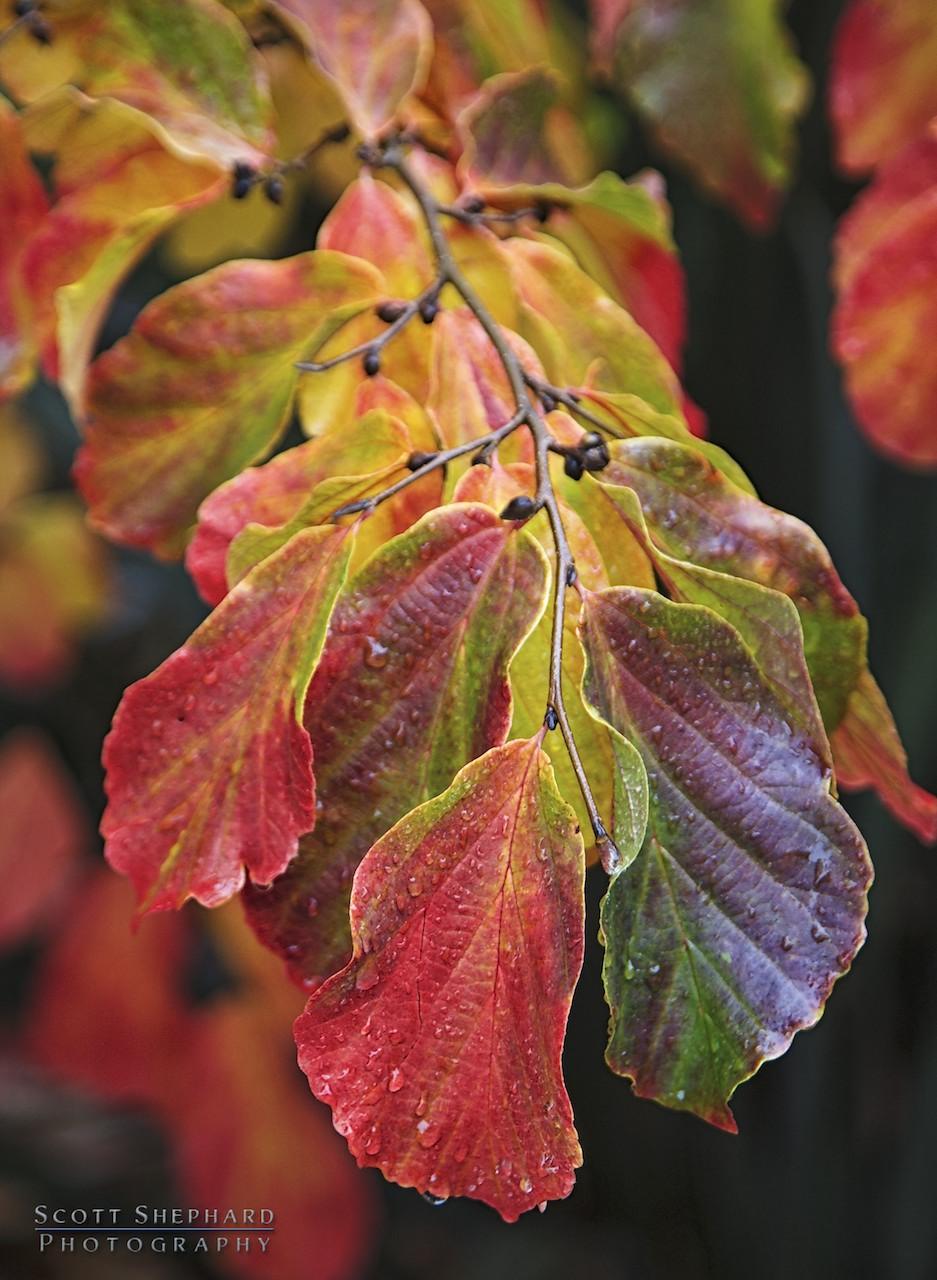 2014 02-04 Dreaming of Fall Colors by Watertown, South Dakota, photographer Scott Shephard