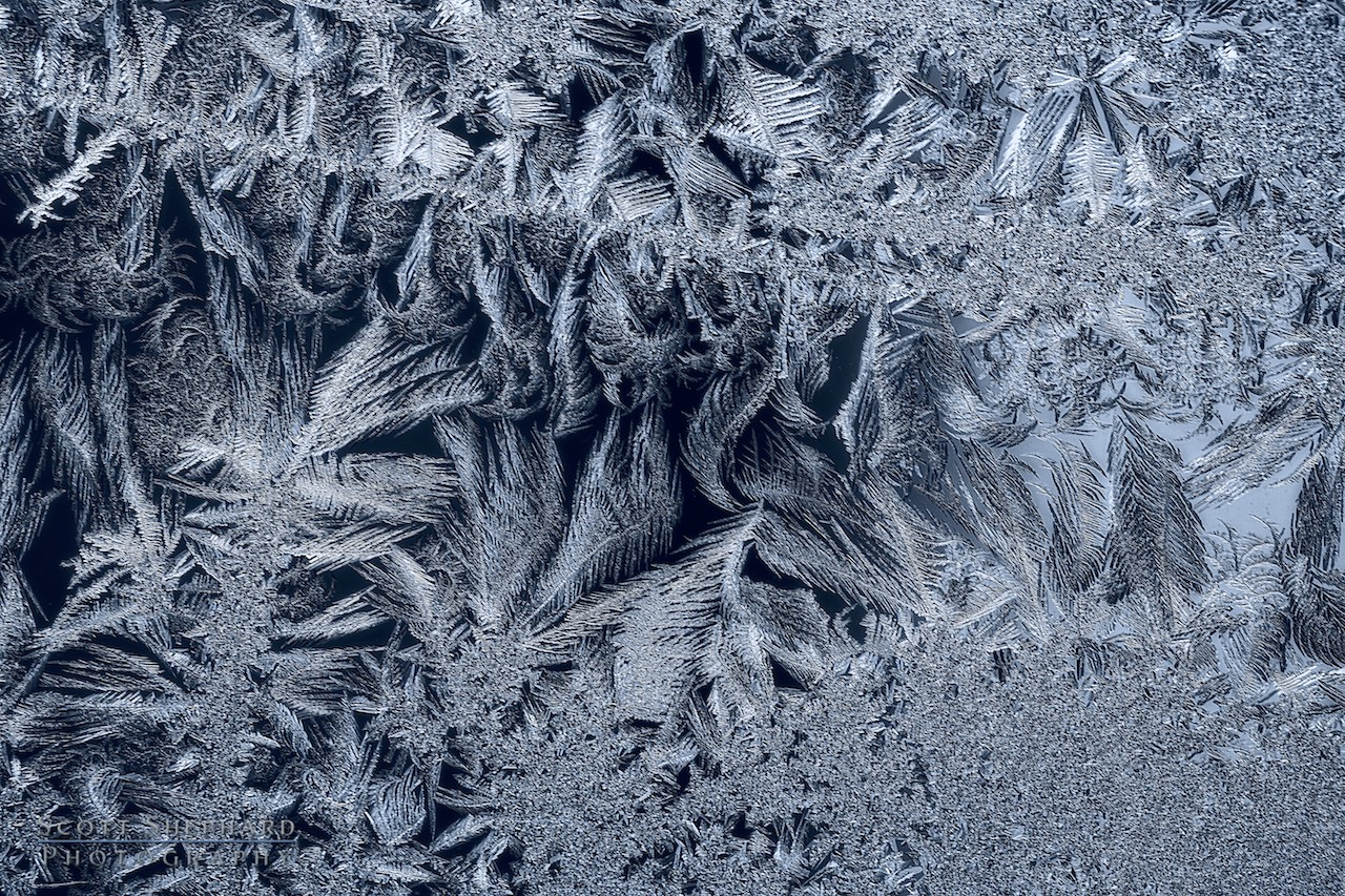 2013 12-30 Jack Frost by Watertown, South Dakota, photographer Scott Shephard