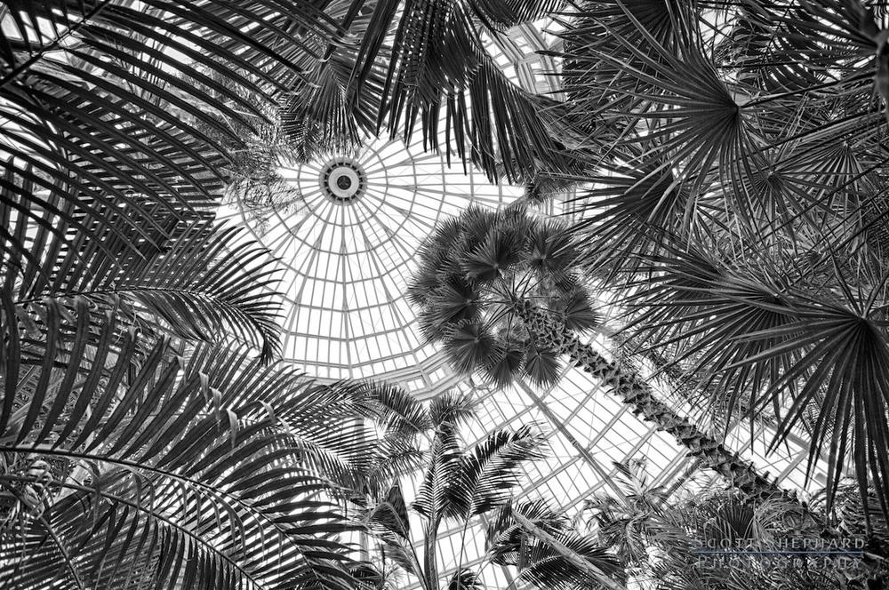 Central Dome - Como Park Conservatory