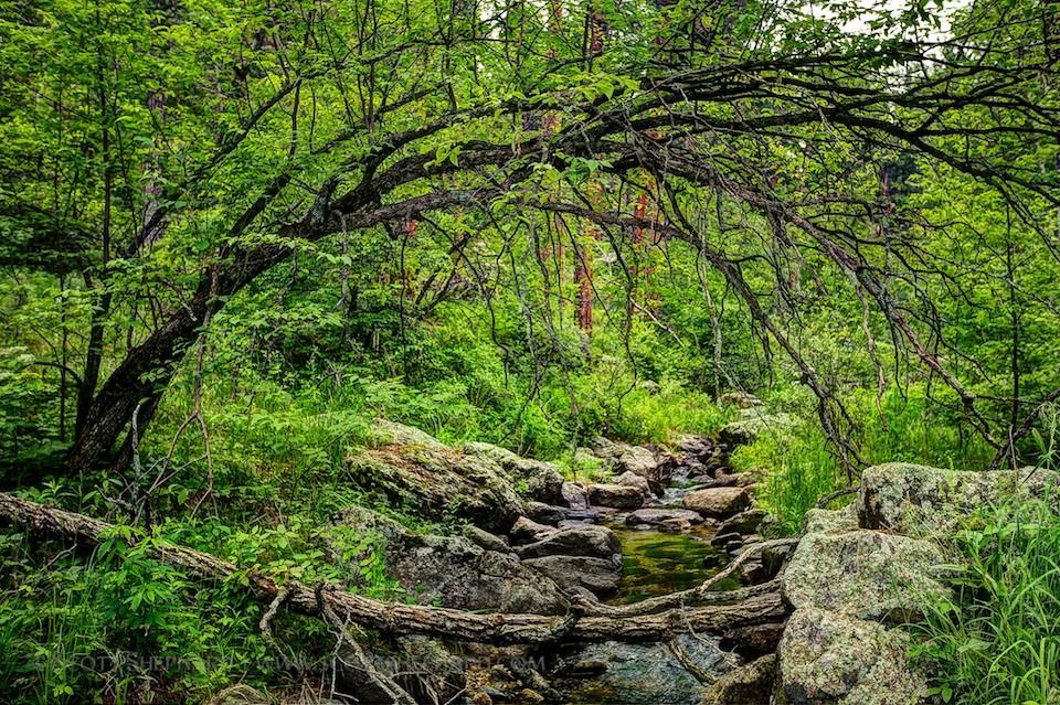 2013 07-05 Bridging the Creek (1)