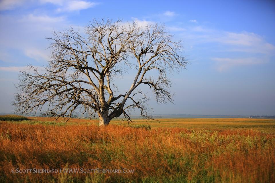 2013 08-20 Prairie Relic