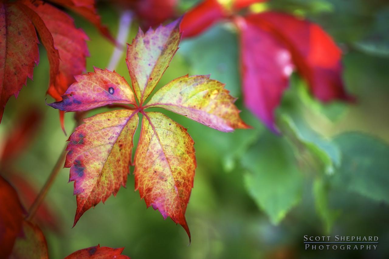 2013 10-10 Change of Seasons by Watertown, South Dakota, photographer Scott Shephard