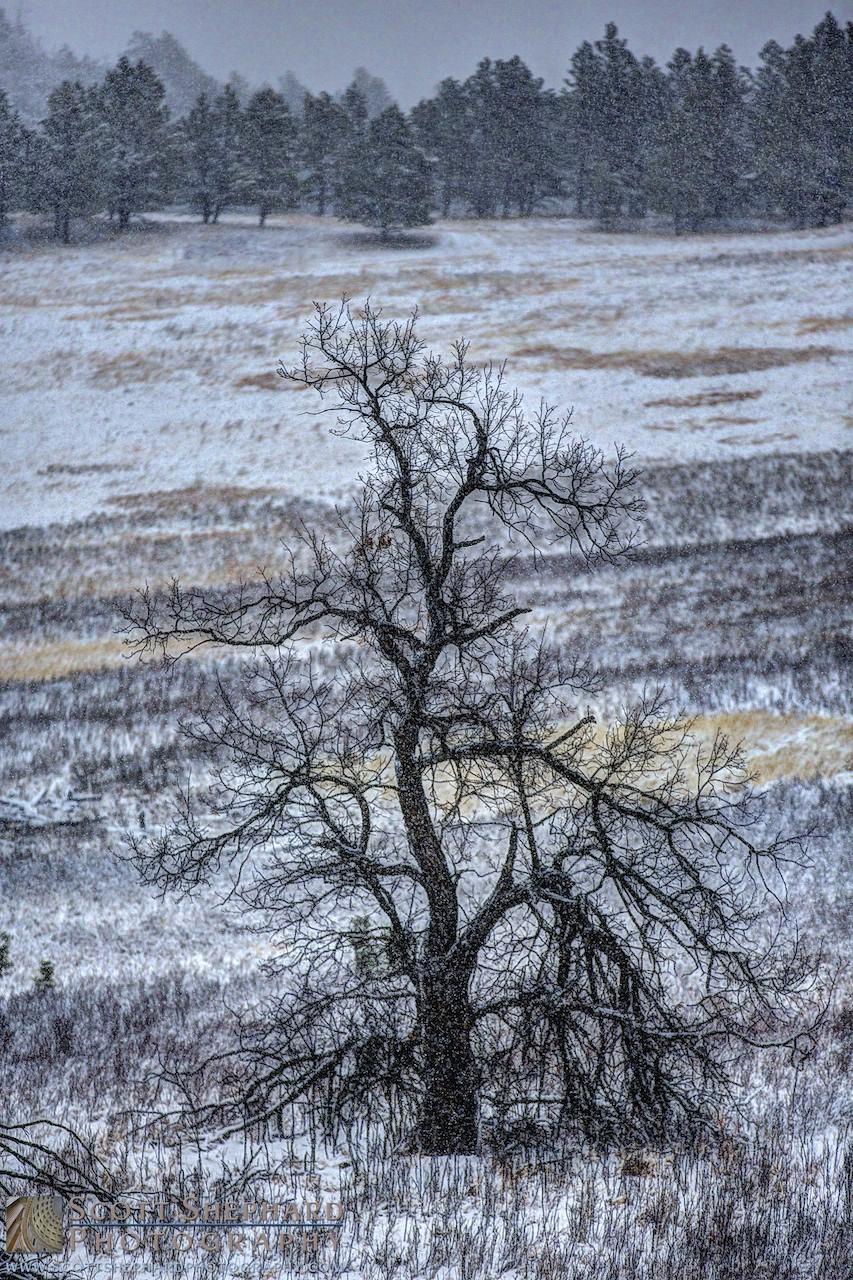 Bare Tree Near Lakota Lake - Black Hills.jpg