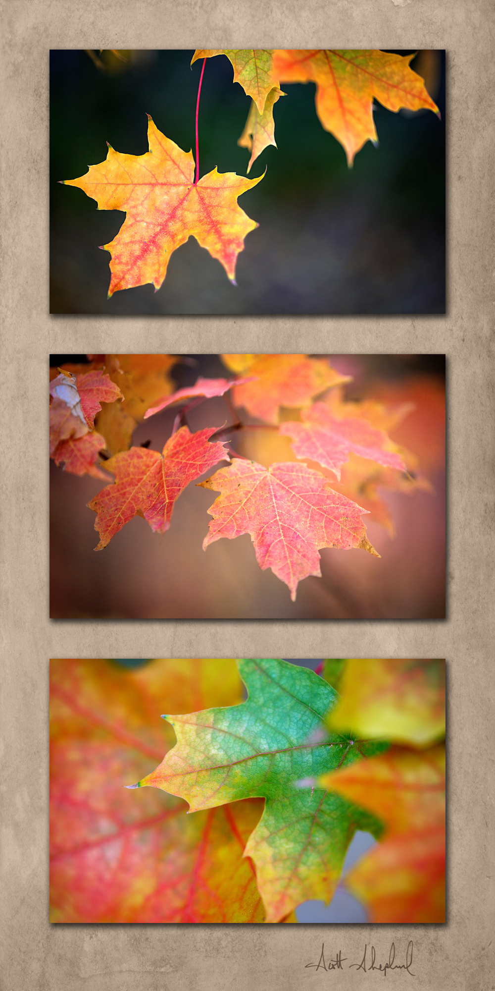 Leaf Triptych.jpg