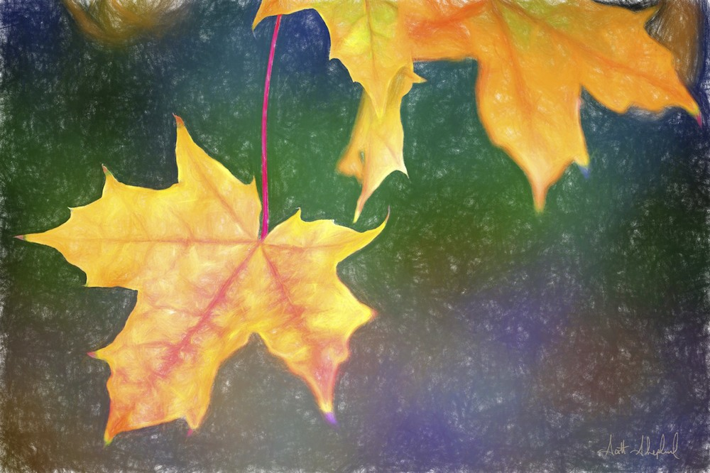 This photo of a maple leaf was taken by Watertown, South Dakota, photographer Scott Shephard