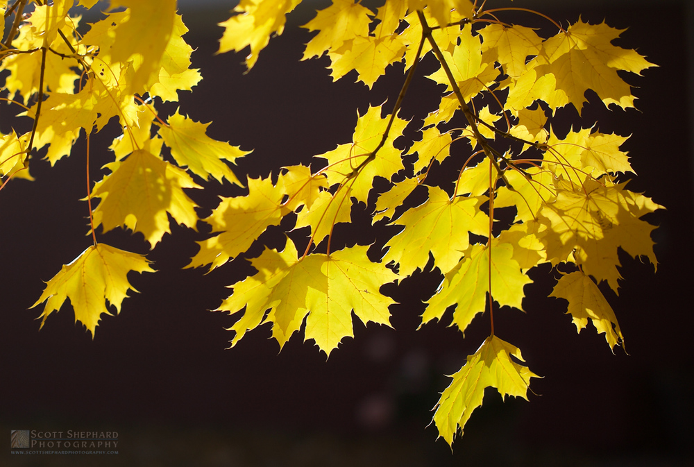Fall Leaves IMG_2495.jpg