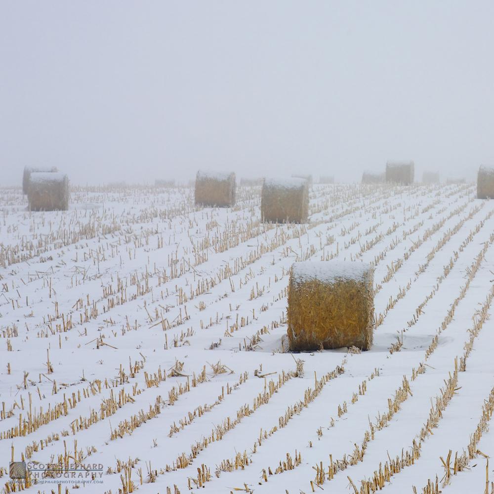 2014 11-24 Winter Scene