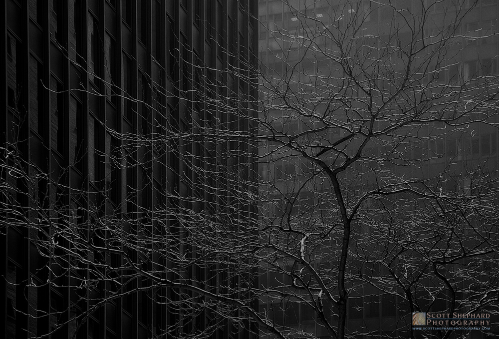 2015 06-18 A Tree Grows in the City