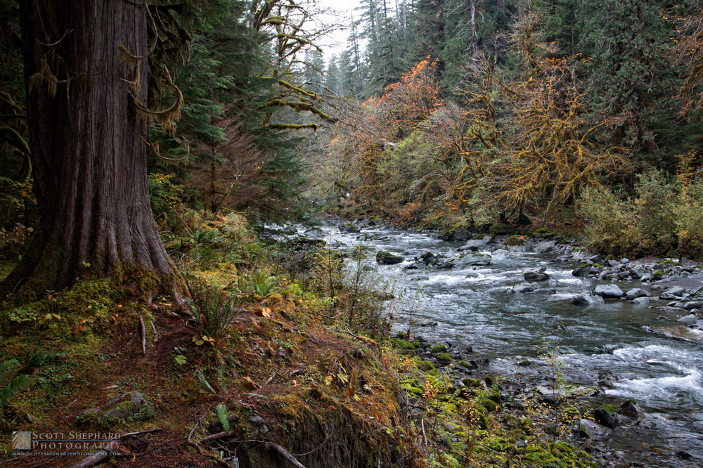 2015 10-19 North Fork Skomomish River