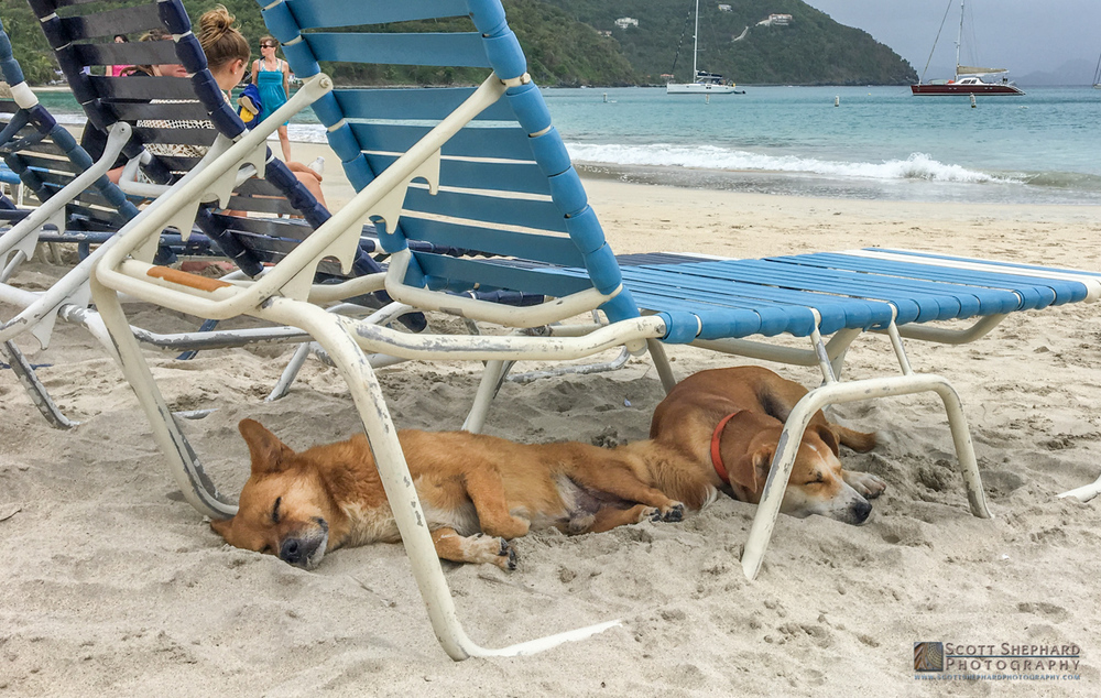 Two dogs sleeping on Cane Garden Beach.jpg