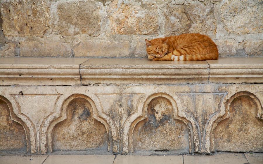 03-10-09-sleeping-cat-dubrovnik-croatia
