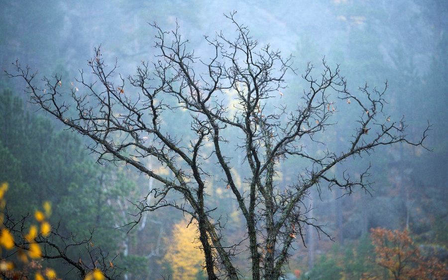 04-26-09-fog-and-tree