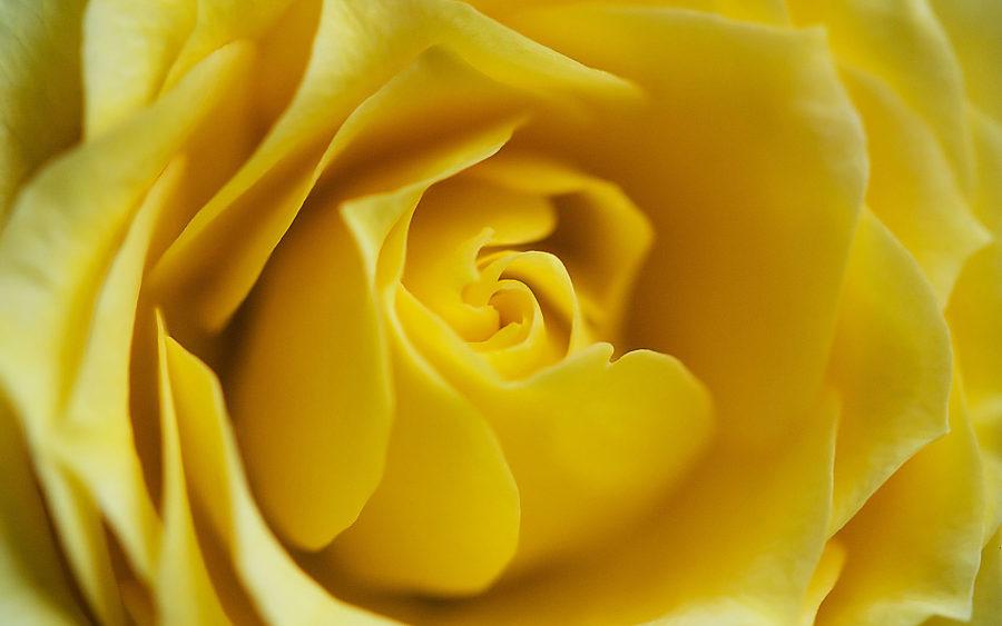 04-16-09-golden-folds