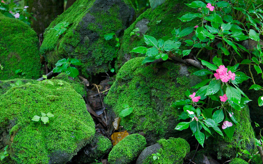 04-18-09-things-grow-on-rocks-there