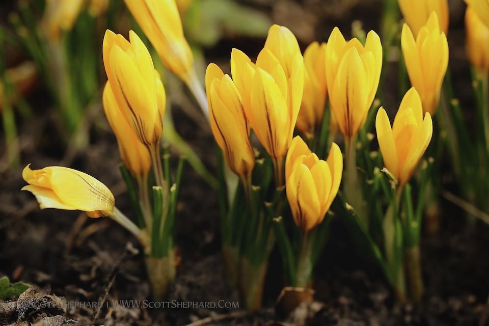 2013 04-29 Rite of Spring by Scott Shephard
