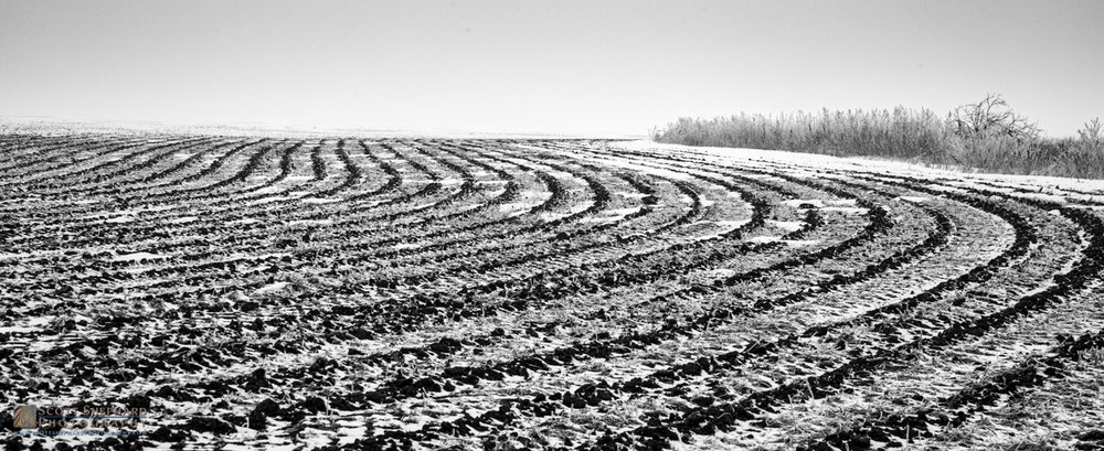 Plowed Field in Light Snow.jpg
