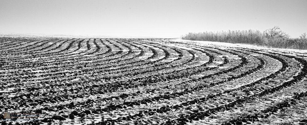 Plowed Field in Light Snow.jpg