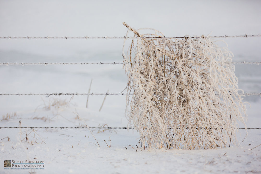 Tumbleweed with Frost.jpg