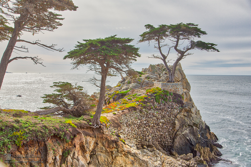 Lone Cypress. jpg
