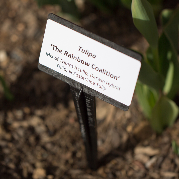 Label - Denver Botanic Gardens.jpg