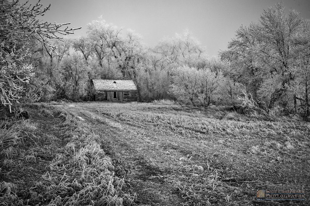 Storage Shed and Frosty Trees.jpg