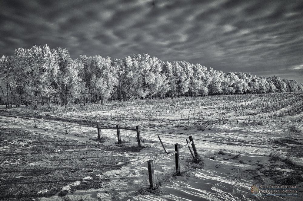 19.01.17 Winter Frost.jpg