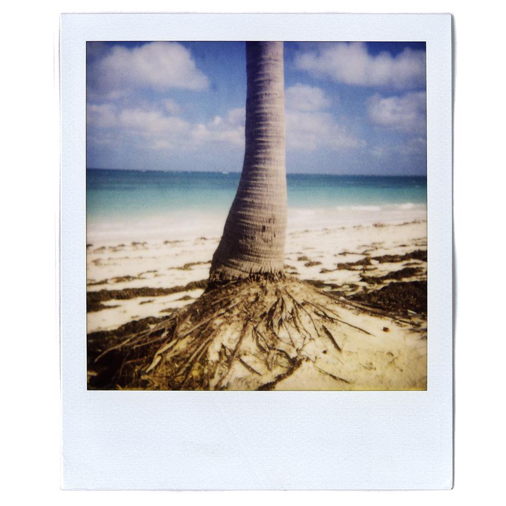 Polaroid12.jpg