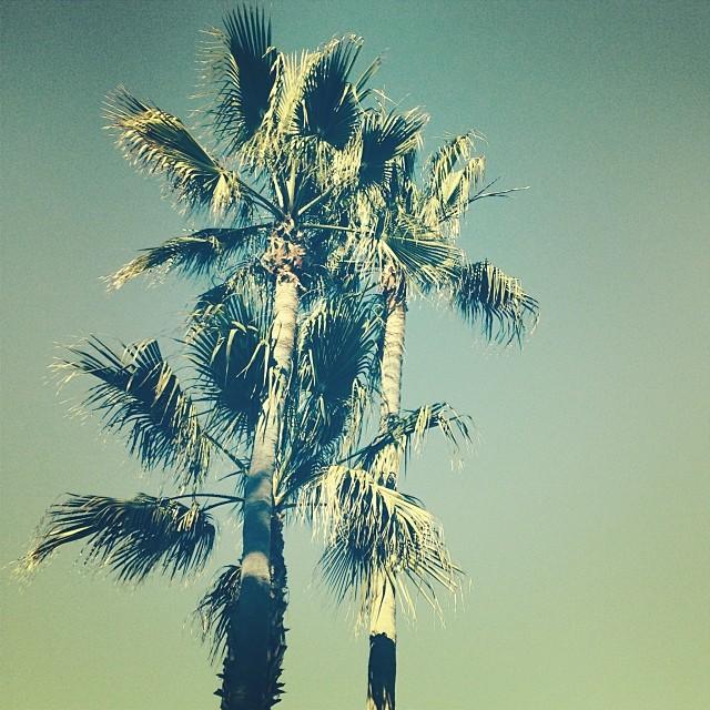 Beach trees.