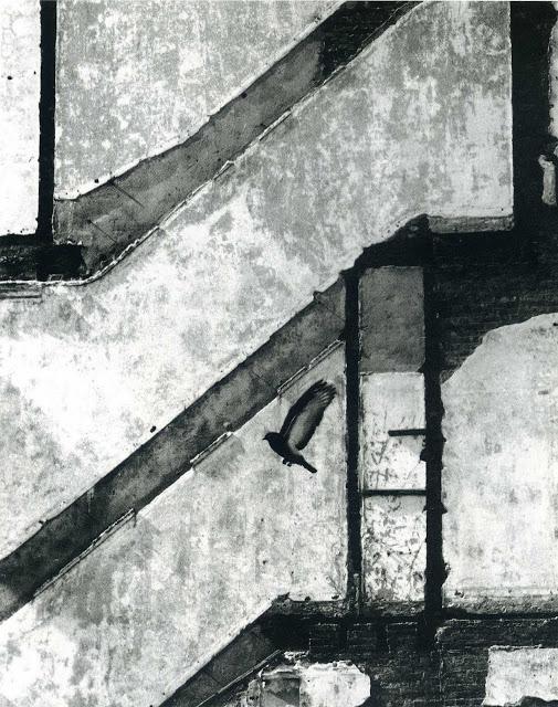 Andre Kertesz-9.jpeg